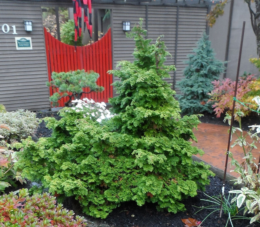 Red Guava Dwarf Trees For Landscaping — Randolph Indoor and