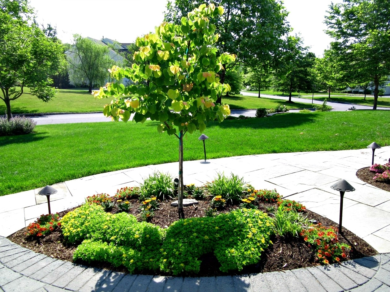 Dwarf Pine Trees For Landscaping Randolph Indoor And