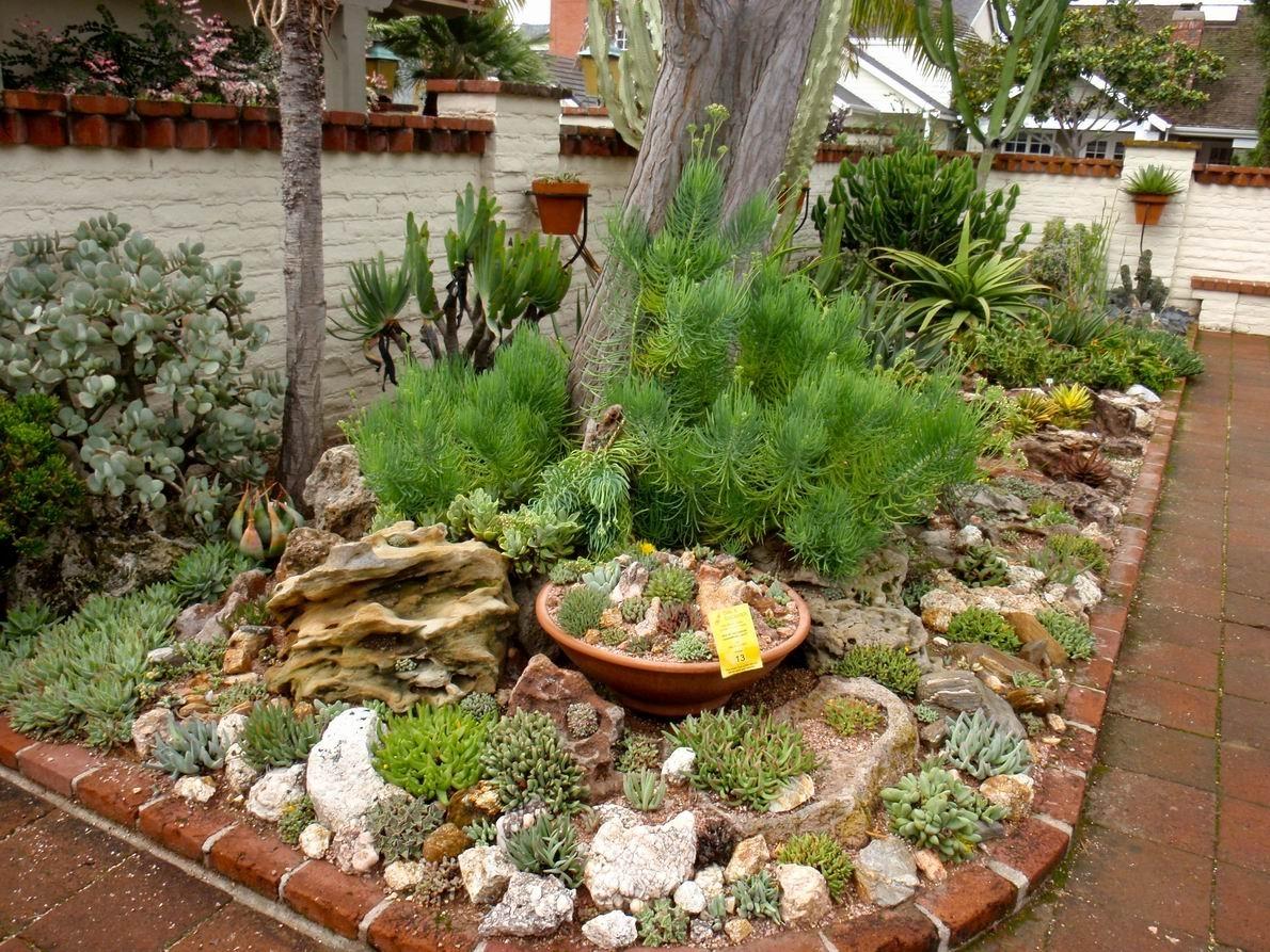 Desert Landscaping Succulents With Pots