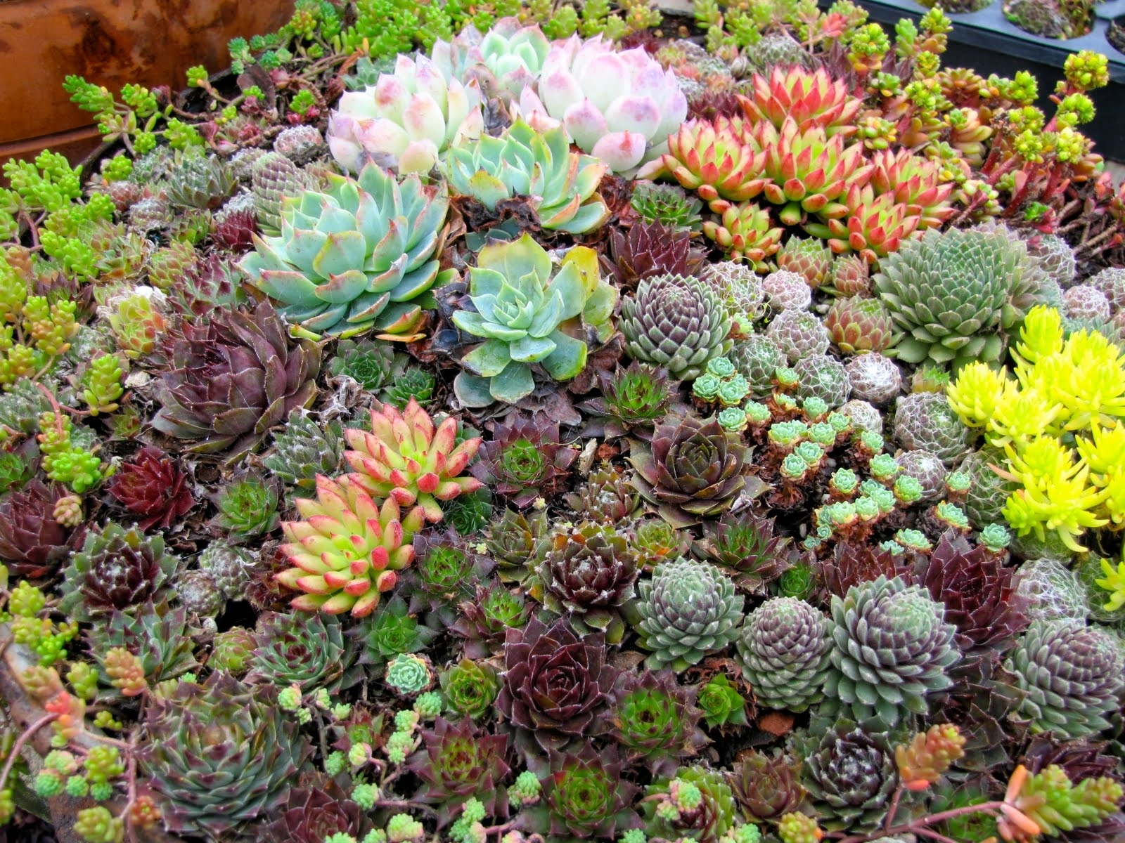 Front Yard Landscaping With Succulents Diy Randolph Indoor