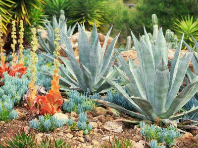 Succulent Garden Design Plans Archives Randolph Indoor And