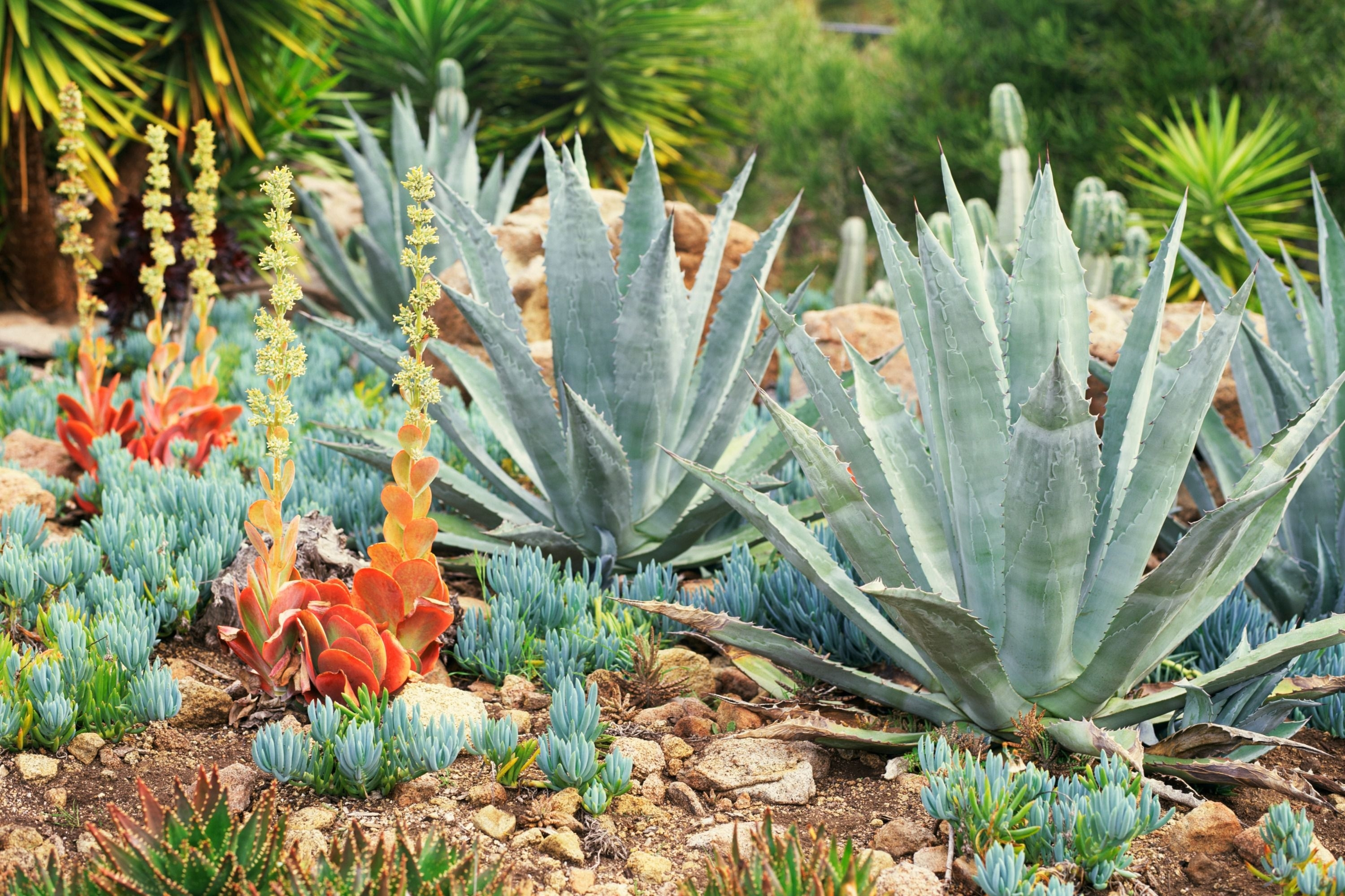 Landscaping With Succulents Plant Ideas Randolph Indoor And
