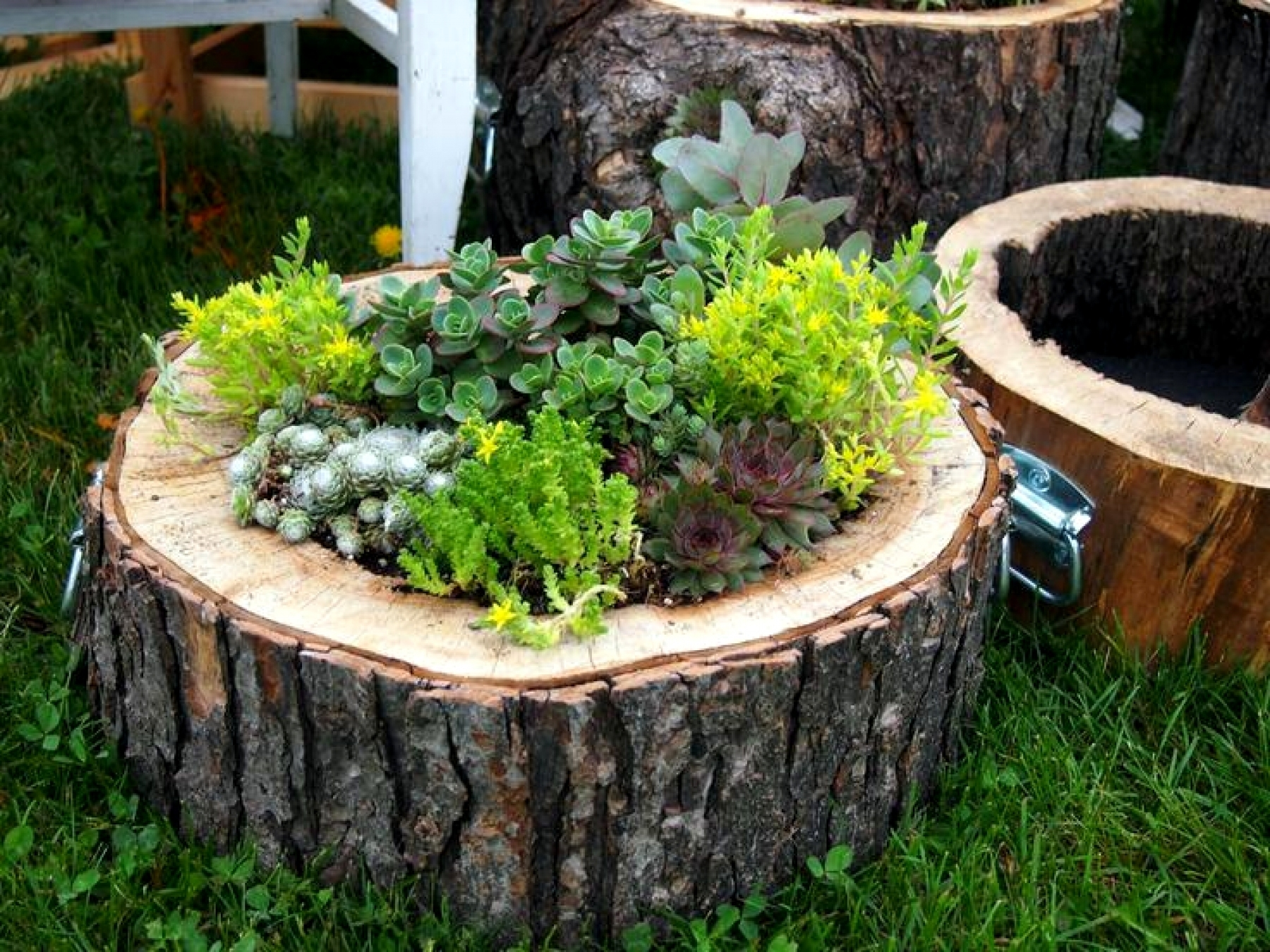 Using Tree Logs In Landscaping