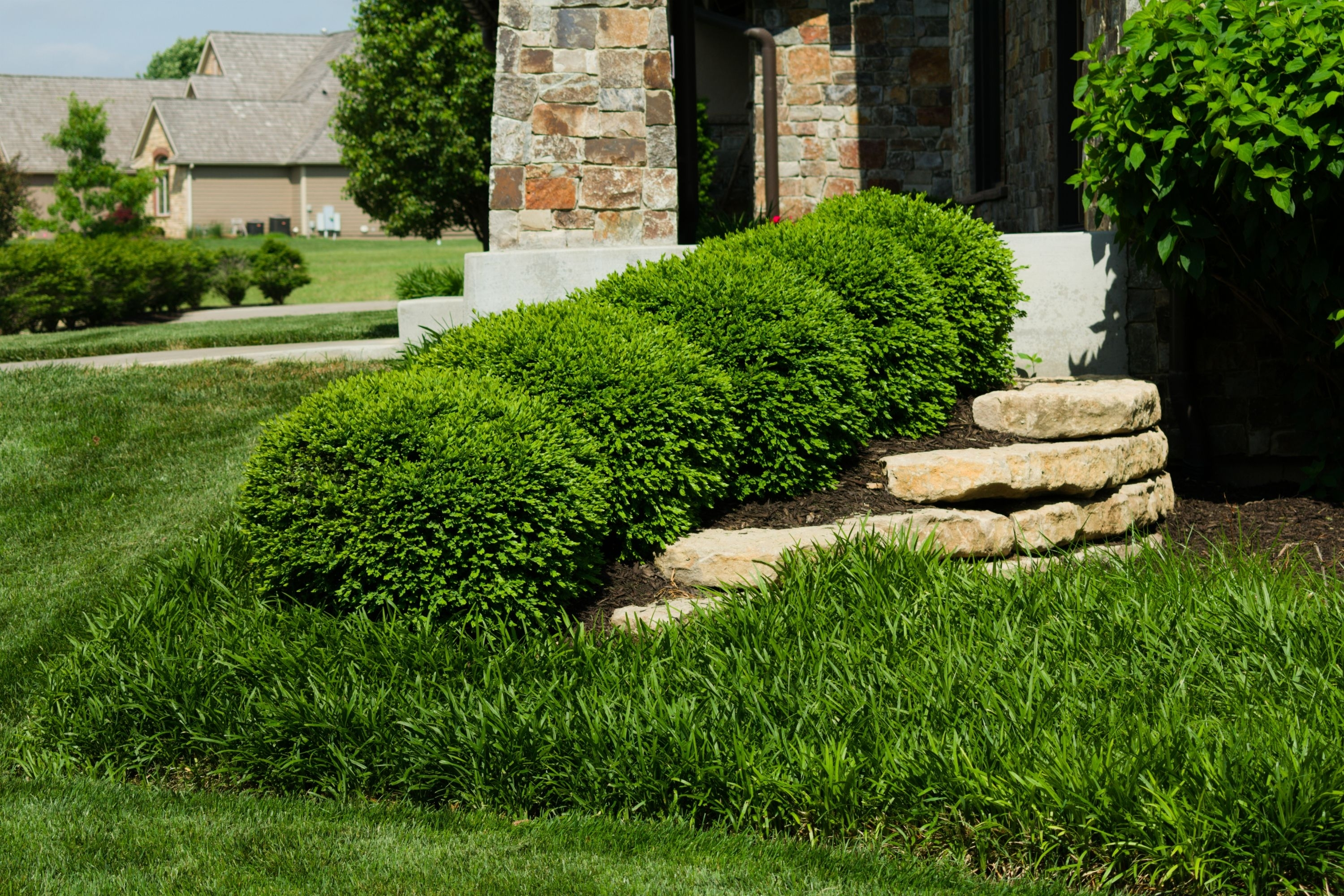Boxwood Landscaping Ideas Randolph Indoor And Outdoor Design